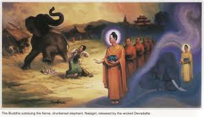 Devadatta's third attempt on Buddha, using the fierce man-killer elephant Nalagiri after making it drunk with liquor